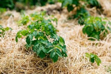 Основы обрезки растений