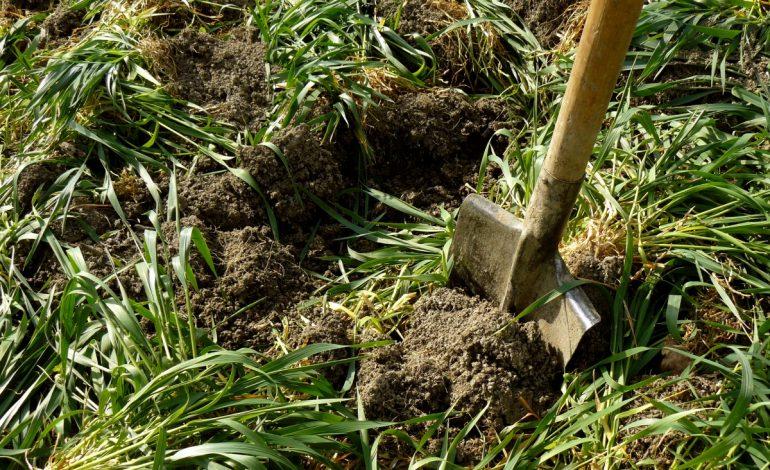 Обогащение почвы органическими веществами