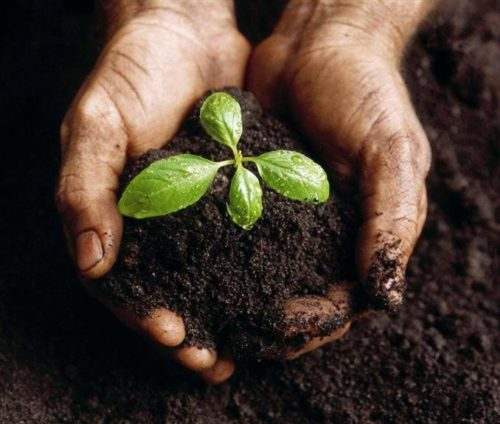 Почвенные смеси для горшечных растений