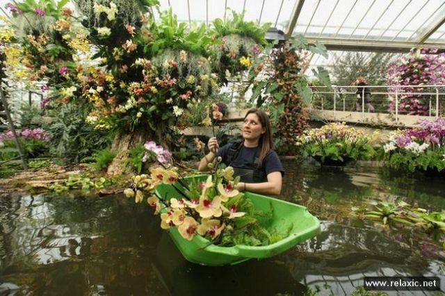 Выращивание растений для выставок