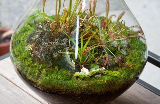 Выращивание растений в сосудах