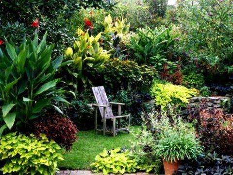 Жизнь в саду